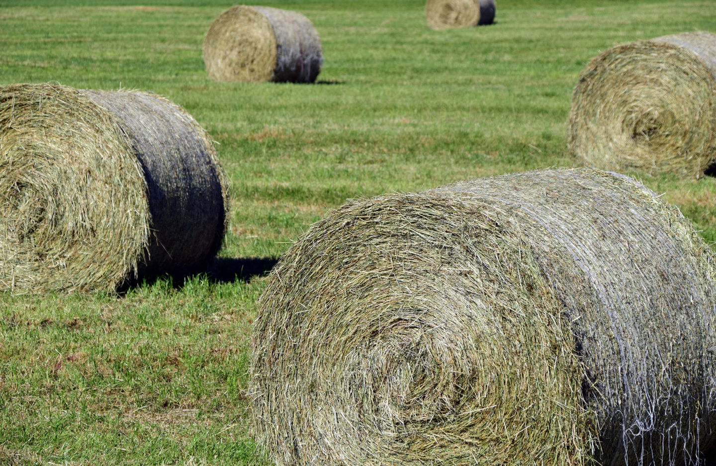 Feed Hay How Much Hay Do I Need To Feed Top Headlines Wlj