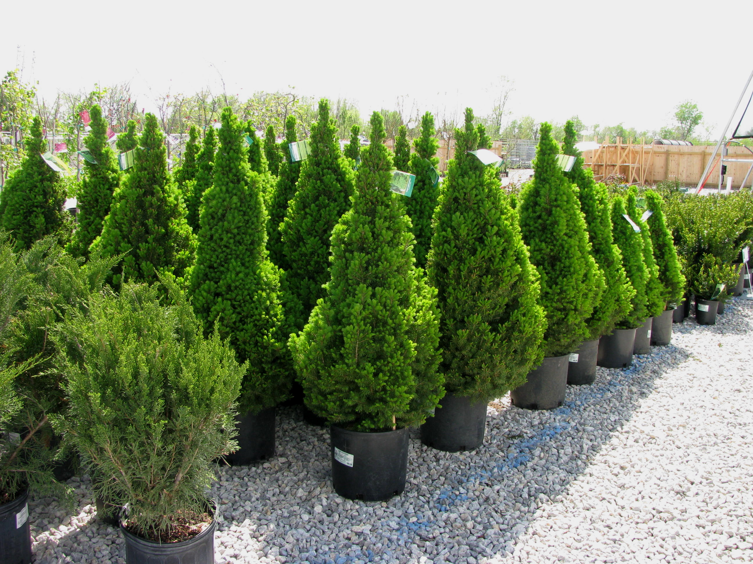Trees And Shrubs Trees Shrubs