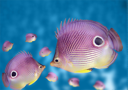 Iphone 5 Clown Fish Wallpaper 30 Awesome Scenes Of Underwater Creature Wallpapers