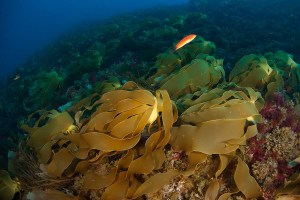 OCEANA-Carlos-Suárez-40140-2011