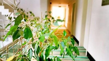 antalya konyaaltı şehir içi oteller blue garden hotel antalya hotels (39)