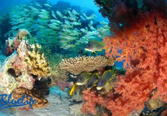 Tętniący barwnym życiem podwodny świat.