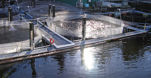 Closed containment systems needed at fish farms to prevent escapes.