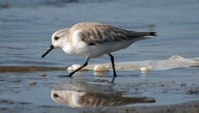The Atlantic Ocean suffers from plastic debris