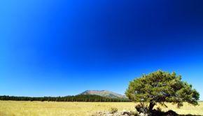 Dry Rural Landscape