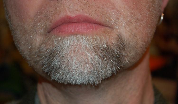 scotts-beard-day-41