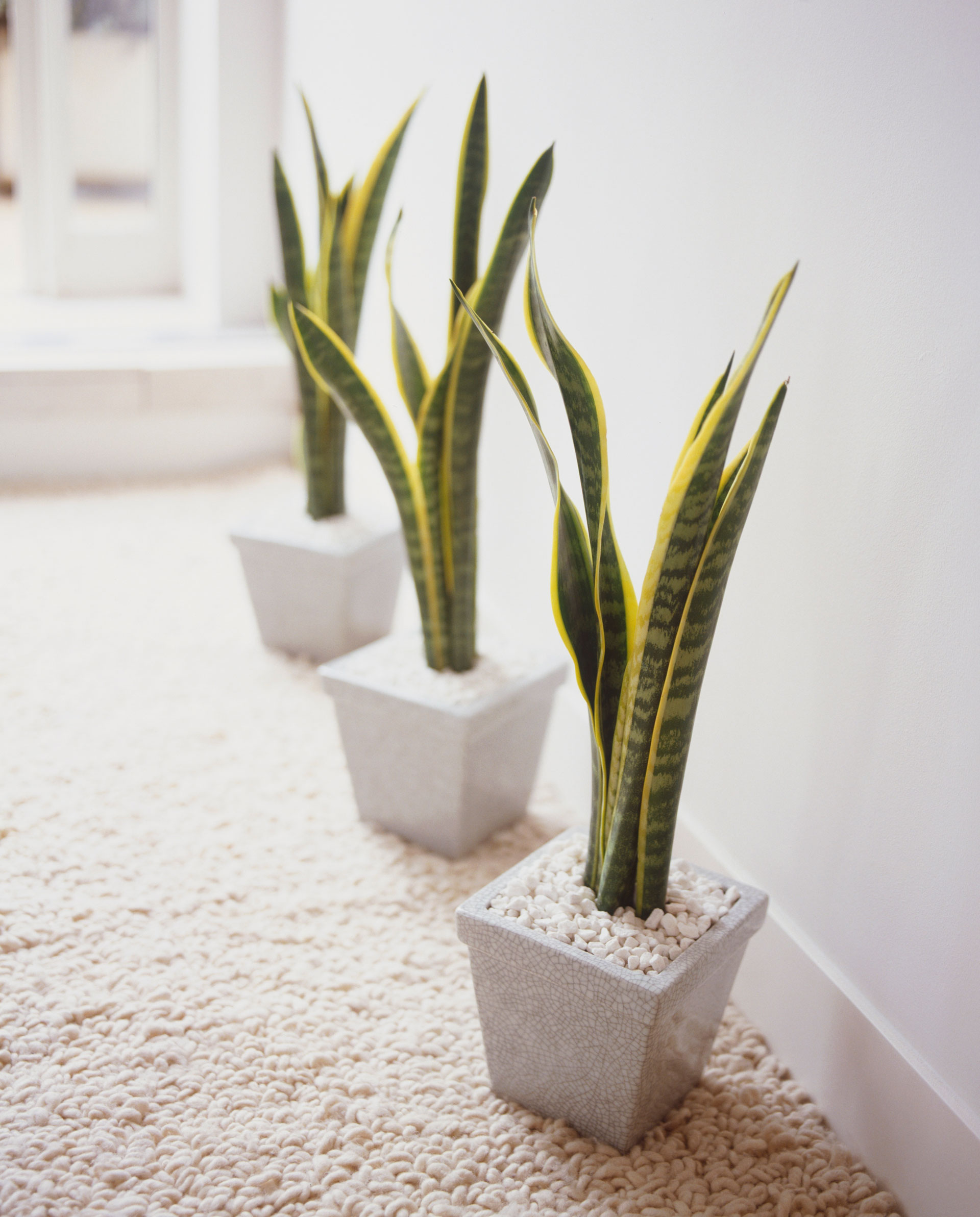 Indoor Plants For The Office The Benefits Of Indoor Plants Blue Sky Personal Support Workers