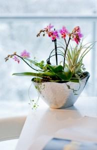 Bildunterschrift: Die eleganten Blüten der Orchidee verleihen diesem Raum eine ganz besondere Atmosphäre. (Bildnachweis: GMH/BVE)