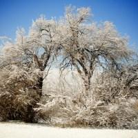 Winter Tree | Blurbomat.com