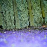 Twig in a Purple Sea | Blurbomat.com