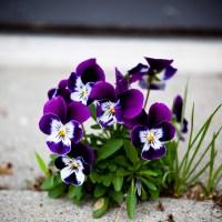 Growing in the Cracks | Blurbomat.com