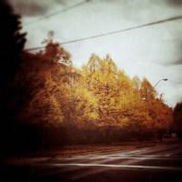 Yellow Tree | Blurbomat.com