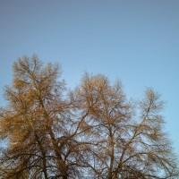 Sunrise on bare trees | Blurbomat.com