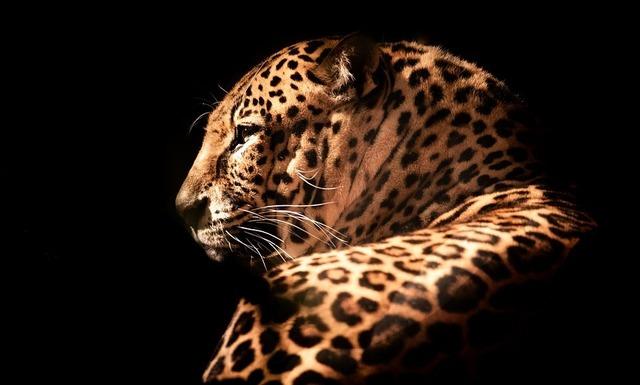 wildlife-3375819_960_720.jpg