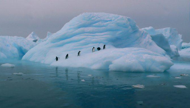 "Penguins in Antarctica (2005) <br>Image by <a href=""https://www.flickr.com/photos/vassil_tzvetanov/2272308142"">Vassil Tzvetanov</a> - used under creative common license"