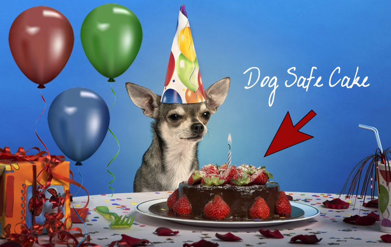 Chihuahua-Dog-Safe-Birthday-Cake-Recipe-Dog-Theme-Party-Ideas