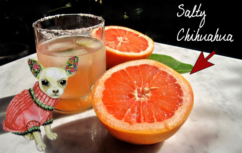 Salty-Chihuahua-Cocktail-Dog-Theme-Party-Ideas