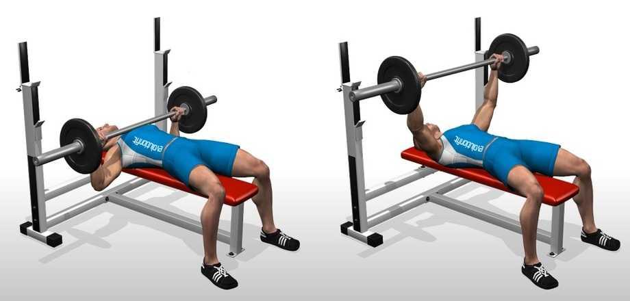 Flat Barbell Bench Press O Bodybuilding Wizard