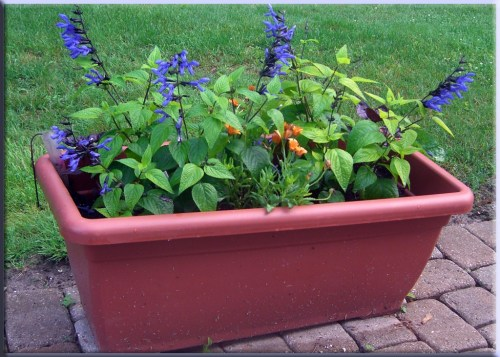 Making Your Own Self Watering Planter Diy