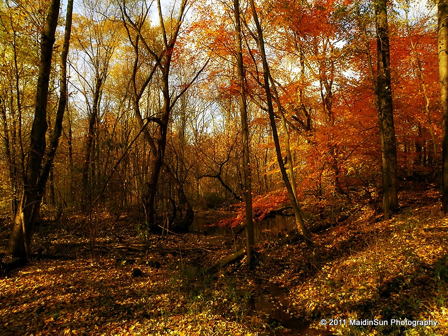 Fall In Maine Wallpaper Autumn In The Woods Life In The Bogs