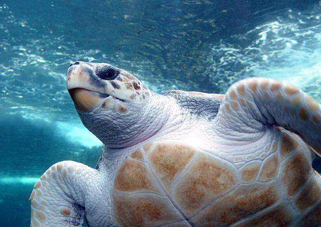turtleyo