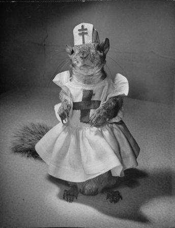 2012 01 09Squirrels