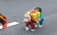 Dog dressed as two dogs holding a present - Boing Boing