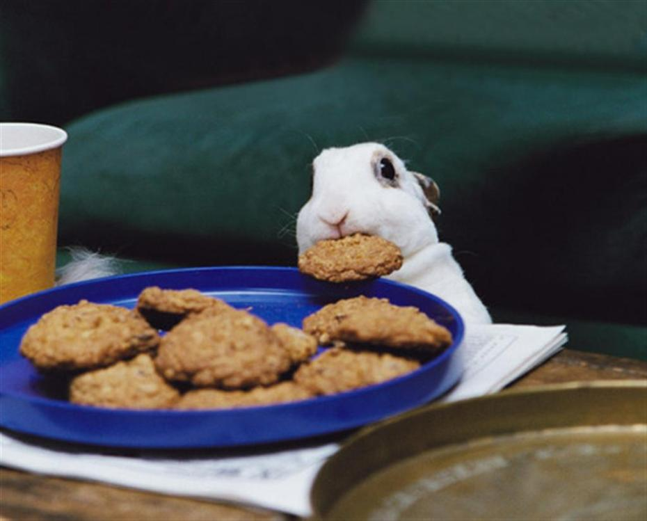 You haz a cookie