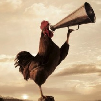 early-riser-rooster-300x225
