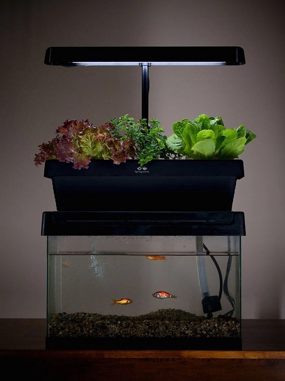 Design for aquaponic access turn fish tank into aquaponics for Aquaponics aquarium