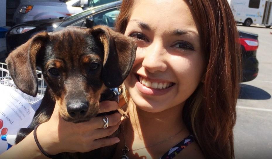Adopting Service Dogs In Huston Texas