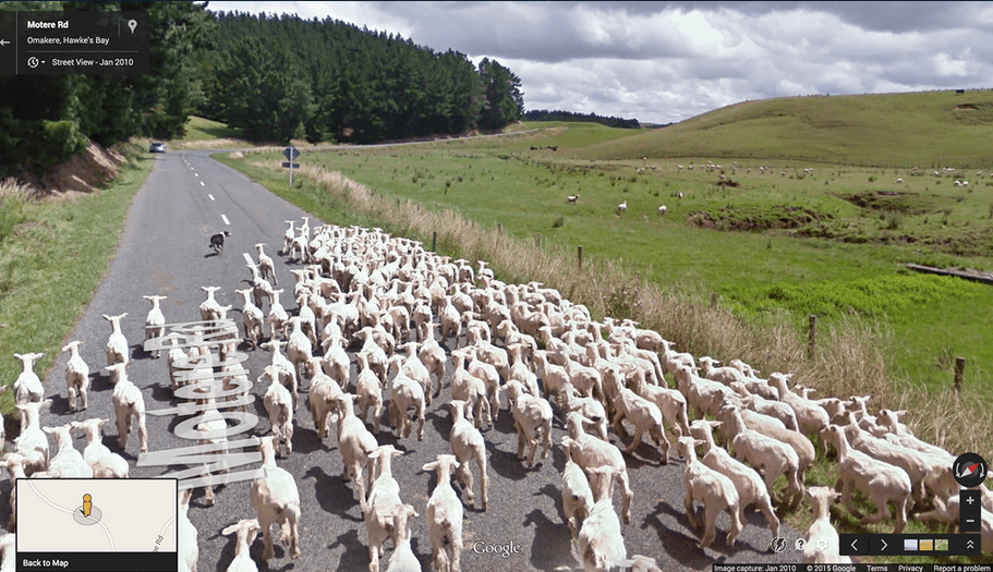 google_sheep_view