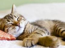 gato_crop