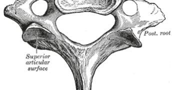 Human Spine-Anatomy of Seventh Cervical Vertebra