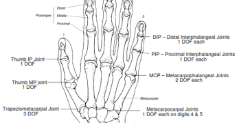 Degrees of Freedom of Upper Limb