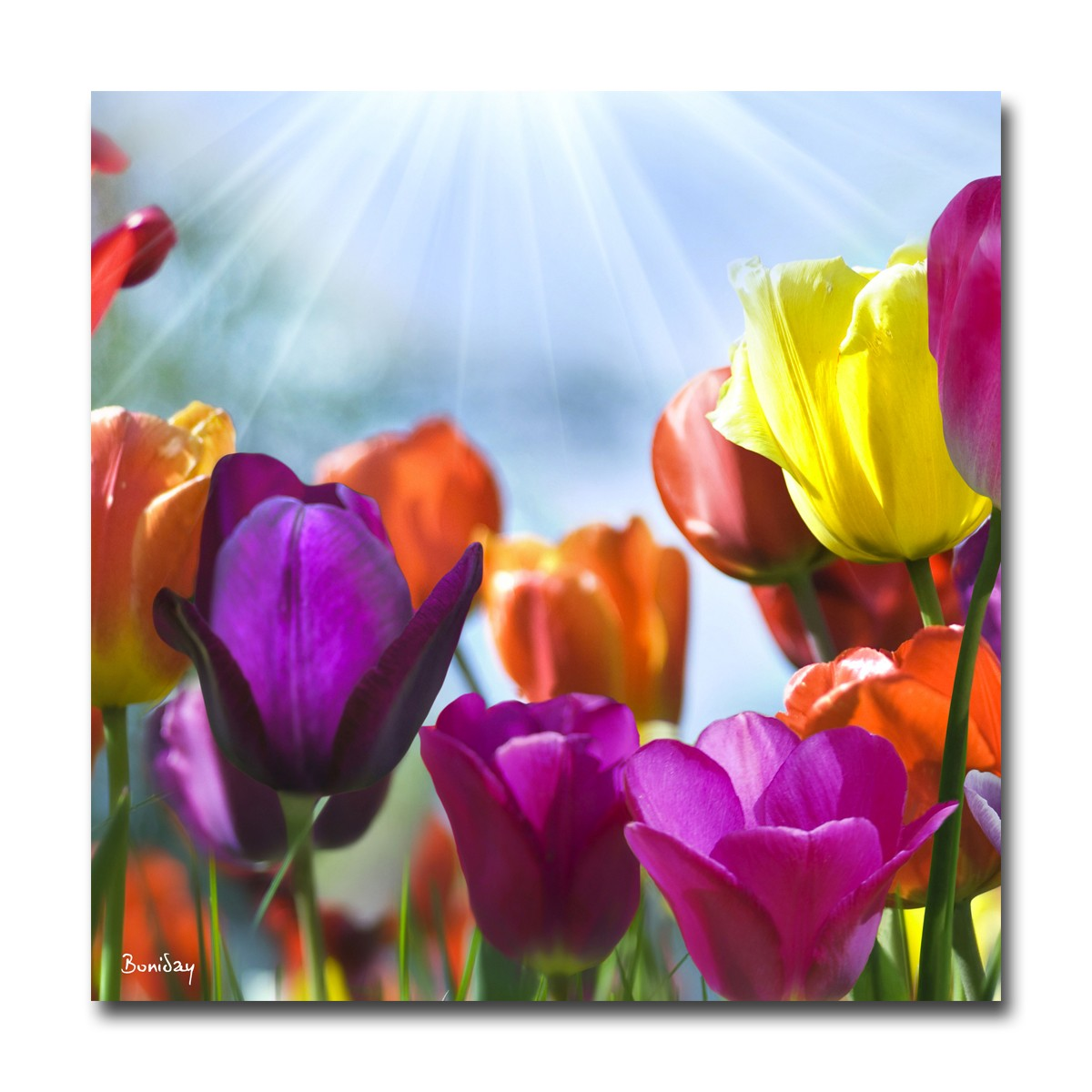Tableau Plexiglas Grand Format Plexiglass Design Fleur Multicolores