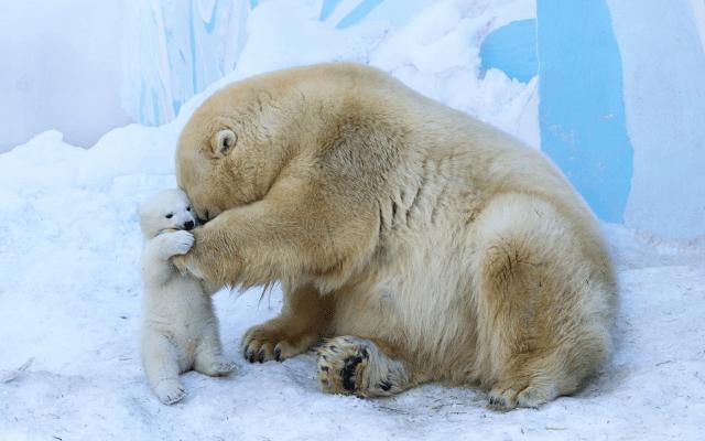 Ferret Wallpaper Iphone Wallpapers Animals Polar Bear Zoo Bear Knut Berlin