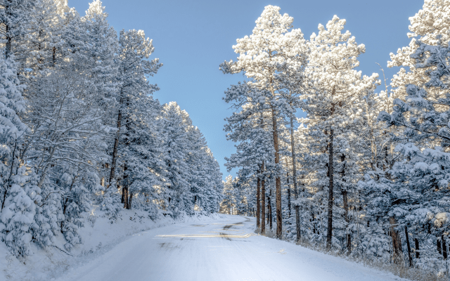 Falling Snow Wallpaper Iphone 5 Wallpapers Snow Tree Winter Nature Road Colorado