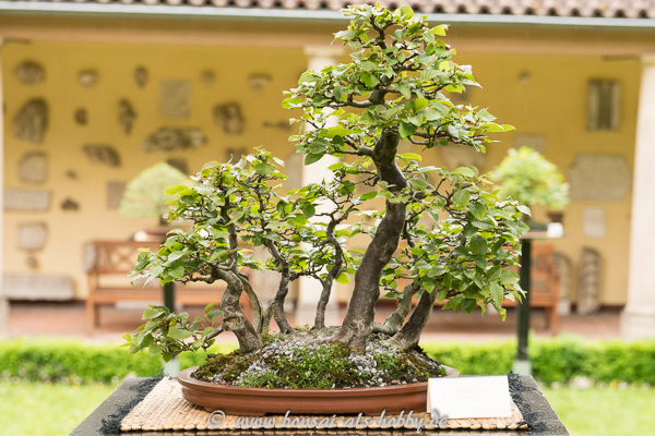 Bonsai Als Hobby Bonsaiausstellung 2015 Im Lapidarium Stuttgart - Fotos Video