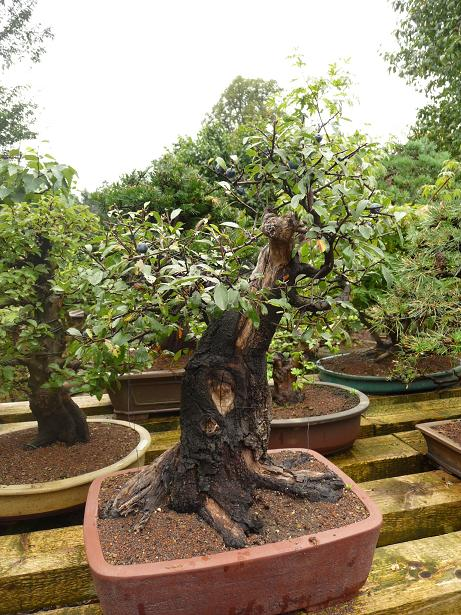 A Visit To The Bonsai Garden Of Walter Pall By Luka Musich - Bonsai Malus