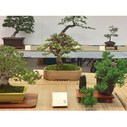 Supreme Merrifield Garden Center Bonsai Iterate I Love That Members Society Can Show Any A Opportunity To See What Friends Are Working Including Works houzz-03 Merrifield Garden Center
