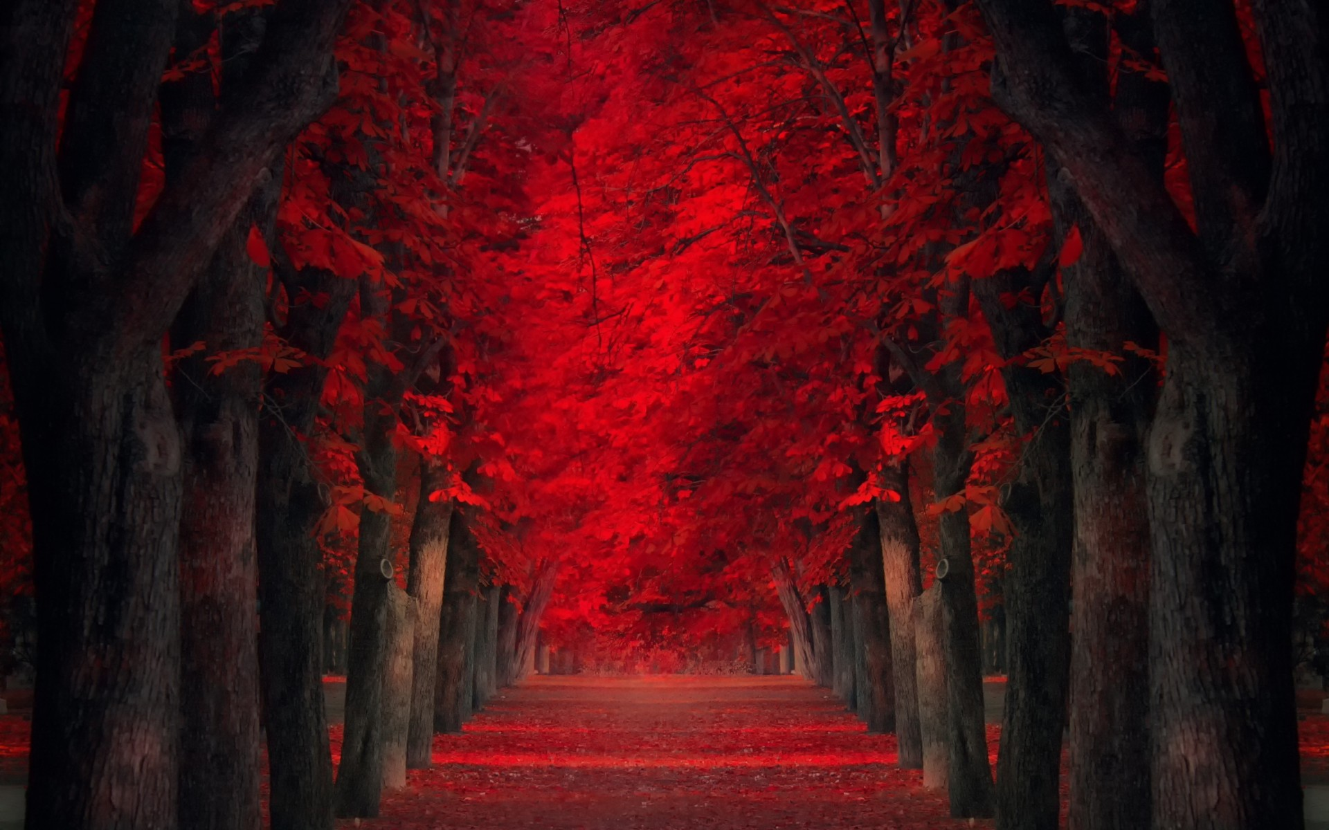 Falling Leaves Hd Live Wallpaper Desktop Wallpaper Foglie D Autunno