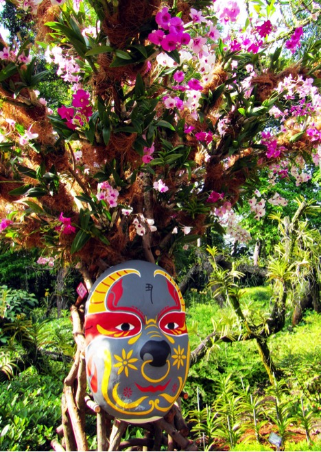 Orchids and Mask in Singapore's Botanic Gardens