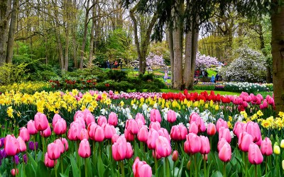 Tulips at Keukenhof Gardens outside Amsterdam