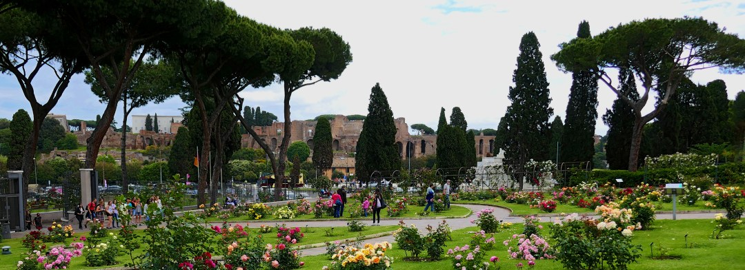 View of ruins on Palatine Hill in Rome from Rose Garden for boomervoice