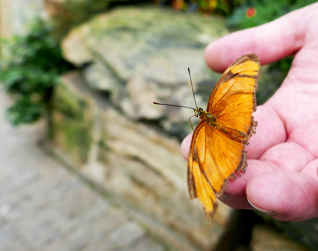Butterfly in Butterfly Conservatory on Niagara Parkway
