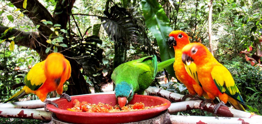 Birds eating together for Benefits of solo travel on boomervoice