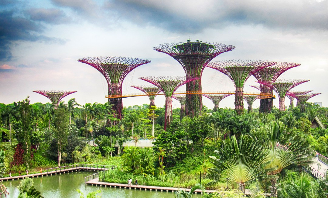 SuperTrees for for Benefits of solo travel on boomervoice