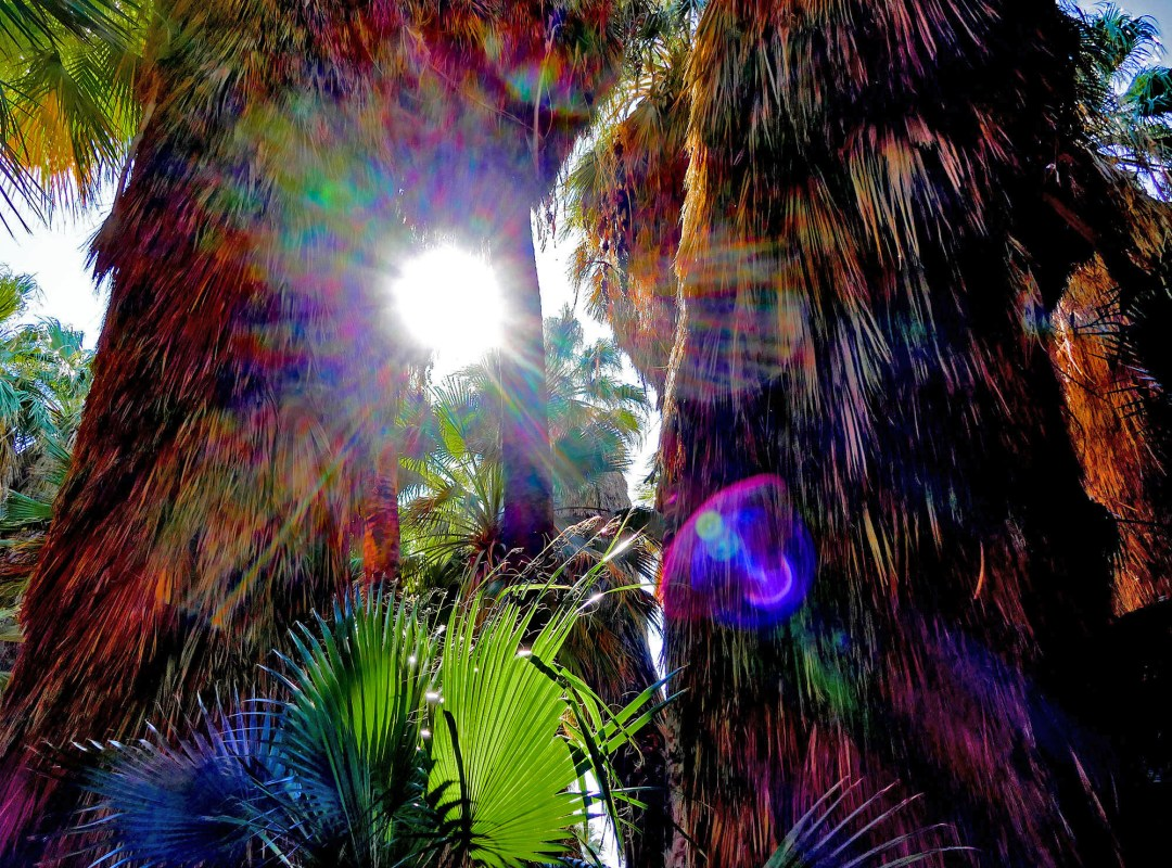 Sun spots at Indio Hills Palms for boomervoice