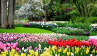 Why blog Keukenhof for boomervoice